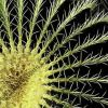 4D SB Cactus Patterns