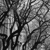 3PM DM Boulevard Trees